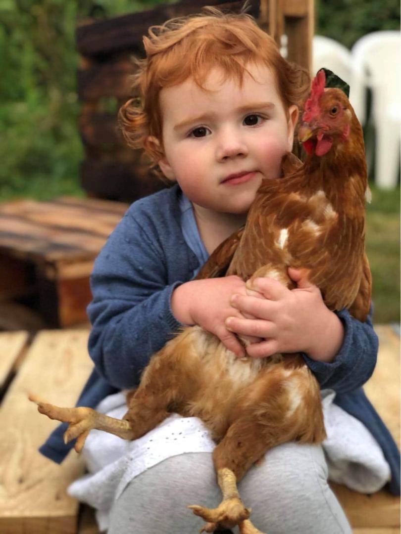 Enfant - poules - nature